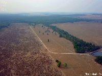 Floresta, carbono e renda. 30656.jpeg