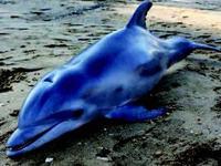 E.U.A.: Mais de 100 animais marinhos apareceram mortos