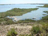 Santa Maria da Feira - Os Verdes Alertam para Reduzida Biodiversidade nos Rios Caster, Uíma e Ribeira de Rio Maior Através da Iniciativa