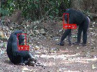 Inteligência Artificial aplicada ao estudo da Vida Selvagem. 31675.jpeg