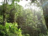 Economia Verde - O subprime ambiental. 26678.jpeg