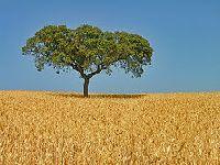 Portugal: Adensam-se as preocupações quanto ao futuro da agricultura no País. 33681.jpeg