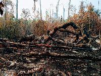 Com Amazônia sob ataque, povos isolados são os mais vulneráveis. 31682.jpeg