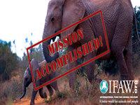 Missão cumprida: Elefantes de Malawi salvos
