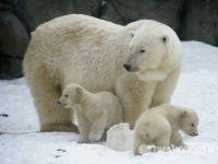 Animais: Rússia entre líderes contra crueldade. 17685.jpeg
