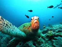 Biodiversidade em perigo, pessoas em perigo