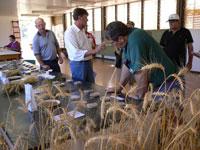 Brasil quer preservar sementes no banco global de preservação de espécies