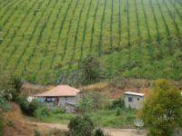 Revogação de norma ambiental pode comprometer recuperação de florestas em São Paulo. 23704.jpeg