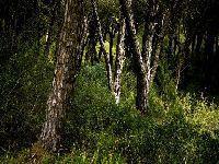 Incêndios fazem Cristas esquecer os cortes que impôs na floresta. 27704.jpeg