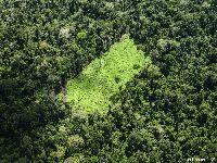 Avanço da agropecuária, estradas ilegais e floresta no chão. Assim começa o ano no Xingu. 30704.jpeg