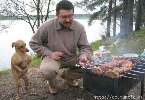 Sibéria: Cachorro no churrasco hospitaliza cinco jovens