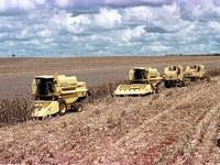 Produção agrícola: Safra de grãos vai ser menor