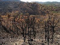 PSD e CDS-PP cortaram mais de 20 milhões na defesa da floresta. 29709.jpeg