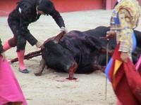 Espanha: Expondo os maus tratos dos animais
