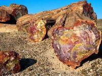 Histórias contadas por árvores de 20 milhões de anos. 33713.jpeg