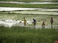 Participação das mulheres fortalece e multiplica os Sistemas Agroflorestais. 17720.jpeg