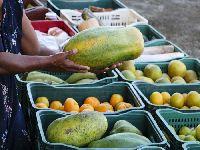 Quilombolas e caiçaras distribuem, em três meses, mais de 50 t de alimentos para famílias vulneráveis. 33725.jpeg