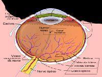 Implante corrige graves problemas de visão. 24727.jpeg