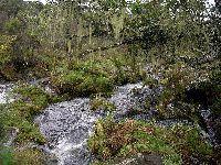 Verdes Consideram Positiva Estratégia Nacional de Conservação da Natureza e Biodiversidade. 28728.jpeg
