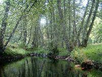 Parque Natural de Montesinho - Os Verdes Insistem no Urgente Cumprimento da Recuperação dos Passivos Ambientais Decorrentes da Atividade Industrial Mineira. 33729.jpeg