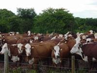 Brasil retoma exportação da carne à Rússia