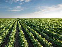 COP23 - As commodities ambientais e a métrica do carbono. 27737.jpeg