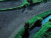 Os Verdes exigem esclarecimentos sobre a origem e sobrevivência de novas plantações. 28738.jpeg