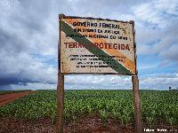 PL da devastação ameaça alimentação dos índios ao liberar transgênicos em Terras Indígenas. 32747.jpeg