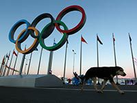 Proteger os Jogos Olímpicos em Sochi. 19759.jpeg
