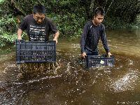 Para inspirar nova geração, povo Wai Wai publica cartilha sobre manejo da castanha. 30761.jpeg