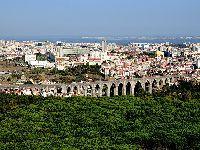 PEV pretende a classificação de árvores na cidade de Lisboa. 33766.jpeg