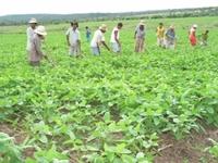 Combater crise de alimentos com agricultura familiar