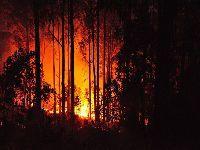 Tragédia: Fogo florestal em Portugal. 26771.jpeg