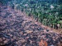 Desmatamento na Amazônia caiu 82%, segundo Imazon