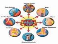 Brasil: Min. Saúde em apoio à pesquisa com células-tronco