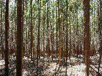 CNA alerta para erros no ordenamento florestal. 26780.jpeg