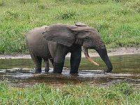 Vírus mata quatro elefantes em zoológico de Odisha, Índia. 31783.jpeg