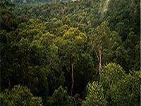 A consciência ambiental deve partir da sociedade e dos gestores públicos. 21786.jpeg