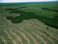 Governo lança 12 medidas de combate ao desmatamento na Amazônia