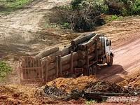 Madeireiros do Pará se comprometem a não comprar matéria-prima de área desmatada