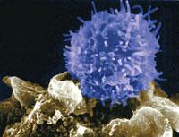 Cientistas criam primeiras células-tronco embrionárias no Brasil