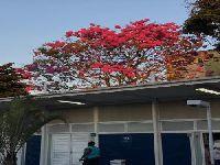 Funcionários de clínica da família em Vila Kosmos, no Rio, convidam população a defender saúde. 29808.jpeg