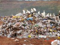 """Lixo inglês : """"o lixo tratado como lixo"""""""