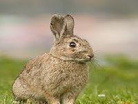 Verdes preocupados com Mortes por atropelamento de fauna selvagem nas estradas Portuguesas. 25815.jpeg