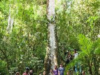 'Estamos lutando pelo mesmo sonho: fazer florestas'. 30815.jpeg