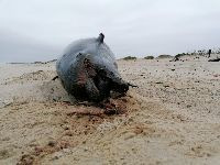 Brigada do Mar retira oito toneladas de lixo de Quiaios à Vagueira. 32823.jpeg