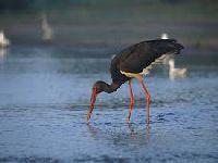 Os Verdes Querem Proibir o Fabrico de Armadilhas de Captura Ilegal de Aves Silvestres. 34828.jpeg
