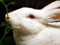 R$ 16,7 milhões a favor de alternativas à experimentação animal. 21835.jpeg