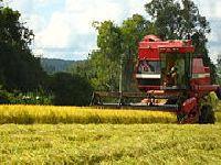 Plano Safra pode livrar agronegócio da crise. 26838.jpeg