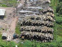 Pós-Rio+20 - Uma análise crítica da economia verde e da natureza jurídica dos créditos ambientais. 26840.jpeg